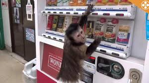 Monkey Uses Vending Machine Unique This Vending Machine Is So Easy A Monkey Can Use It Video Story