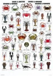 Crab Species Chart Crabs Lobsters Fish Chart Crab Lobster Ocean Creatures
