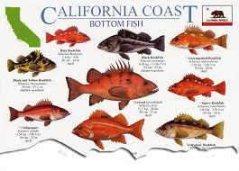California Rockfish Chart 57 Valid Rockfish Chart