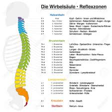 Backbone Reflexology Chart With Accurate Description Of The Corresponding
