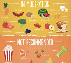 Foods Dogs Should Not Eat Chart Chart Can My Dog Eat That Designtaxi Com