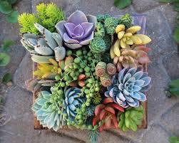 Small Picture Best 25 Small succulent plants ideas on Pinterest Plants Small