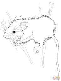 Small Picture Deer Mouse coloring page Free Printable Coloring Pages