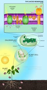 photosynthesis makes useful organic compounds out of co2 plants
