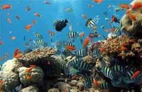 """Résultat de recherche d'images pour """"poissons"""""""