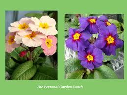 early spring perennials. Modren Perennials The  On Early Spring Perennials