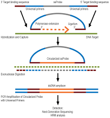 Illumina Sequencing Flow Chart Targeted Next Generation Sequencing For The Detection Of