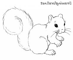 Small Picture Simple Squirrel Drawing How To Draw A Squirrel Drawingforall