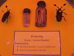 รู้จัก โรค-แมลงศัตรูพืชในสวนลำไย และแนวทางการป้องกัน - เทคโนโลยีชาวบ้าน
