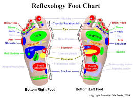 Reflexology Foot Chart The Dr Oz Show