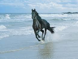 black arabian horse wallpaper. Perfect Black Black Arabian Horse Wallpaper  Google Search With Black Arabian Horse Wallpaper E