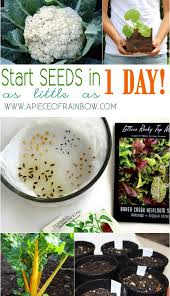 start seeds fast and easy way a piece of rainbow