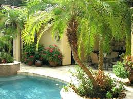 best palm trees for landscaping best trees for pool landscape best tropical pool landscaping ideas on best palm trees
