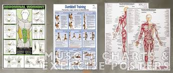 muscle charts and exercise posters