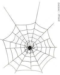 蜘蛛の巣 白バックのイラスト素材 2446442 Pixta