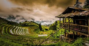 chinese rice field. Fine Rice Longsheng ChinaTim Benedict PouFlickr Intended Chinese Rice Field I