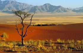 Африка материк Земли Животные Африки