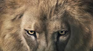 Risultati immagini per leone