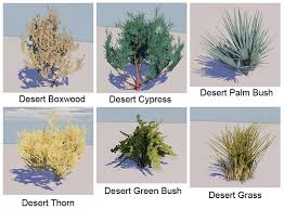 desert plants with names. Contemporary Names Wwwhptwarecoukimagesdesertplantsjpg Inside Desert Plants With Names
