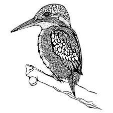 Wat Is De Ijsvogel Een Prachtig Dier Na Veel Fotos Te Hebben