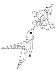 Small Picture hummingbird coloring pages to print PHOTO 383214 Gianfredanet