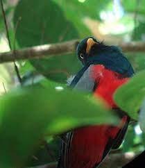 Rara Avis, one of Costa Rica's classic birding sites   Costa Rica Living  and Birding