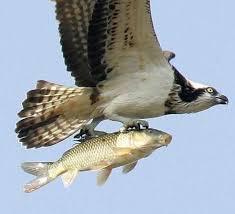 Hasil carian imej untuk nyawa -nyawa ikan