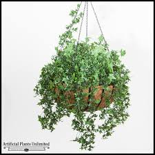 leafy green plants in hanging baskets to enlarge