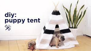 Diy Tent Diy Puppy Pet Tent The Sorry Girls Youtube