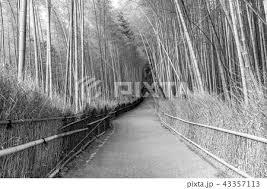 竹 道 嵐山 竹垣の写真素材 Pixta