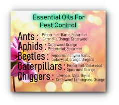 Essential Oils Pest Control Chart What Essential Oils Are Good For Plants