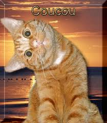 animaux-humour-chat-coucou-big | Image chat drole, Photo chat drole, Chat  humour