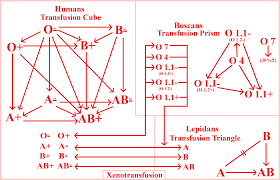 Transfusion Chart By Lucashc90 Fur Affinity Dot Net