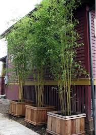 Garden Design with Yes Bamboo garden do at home u important garden design  ideas with Landscape