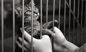 cats in animal shelters. Beautiful Shelters Earlier 8 Fascinating Facts About Cows To Cats In Animal Shelters A