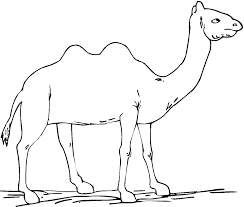 Small Picture camel coloring page pdf Archives Best Coloring Page