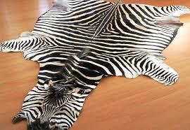 zebra hides and rugs roje exotic leather zebra skin rug faux zebra skin rug uk
