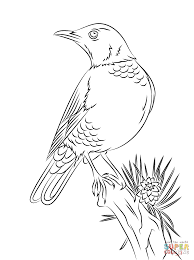 Small Picture Robins coloring pages Free Coloring Pages