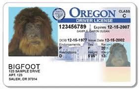Club Oregon Bigfoot Reporting We No For Longer News Licenses Will Dmv Drivers sasquatch Bigfoot Lunch Suspend
