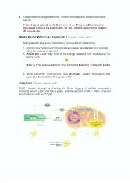photosynthesis and cellular respiration worksheet answer key answers ideas worksheets skills work