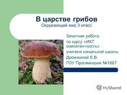 Презентация на тему В царстве грибов Окружающий мир класс  1 В царстве грибов