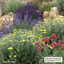 Small Picture 484 best home garden and yard plant list images on Pinterest