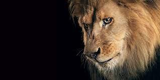 Sad Lion Hd Wallpaper - Lion Hd ...