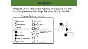 Pedigrees Pedigree Chart According To The Relationships