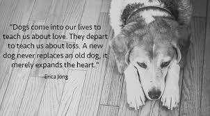 Quotes About Dogs Love Interesting 48 Inspirational Quotes About Dogs That Will Make Your Day The Dog