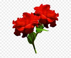 clipart of two red roses hd two red rose png