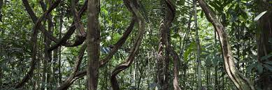 amazon rainforest tree leaves. Plain Amazon 10 Cool Creepy Crawlies Found In The Amazon Rainforest And Tree Leaves N