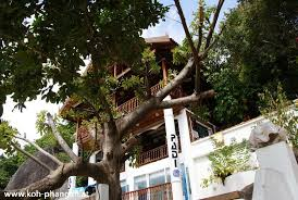 Khao Sok Treehouse Accommodation  Our Jungle HouseTreehouse Koh Phangan
