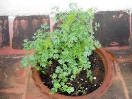 Kitchen Garden In India Plants For Home Garden In India Home Garden