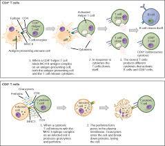 23 2 Adaptive Immune Response Concepts Of Biology 1st